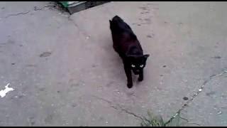 Кошка отчаянно защищает своих котят Cat protects kittens