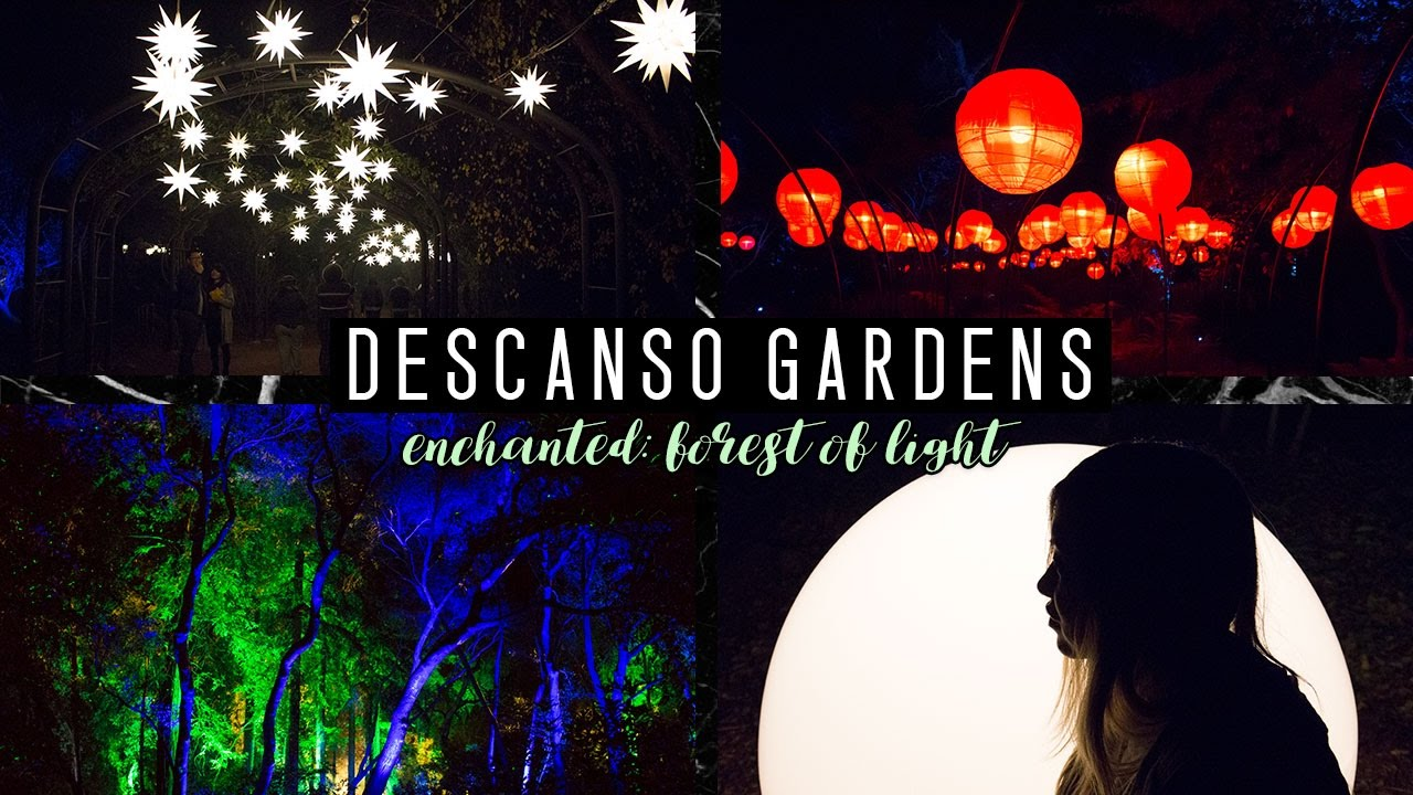 Enchanted forest of light descanso gardens tiffyama - Descanso gardens enchanted forest of light ...