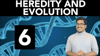 biology heredity and evolution part 6