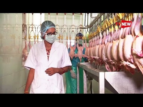 Introducing Meat Products of India Ltd (MPI) - Make in Kerala | Tv New