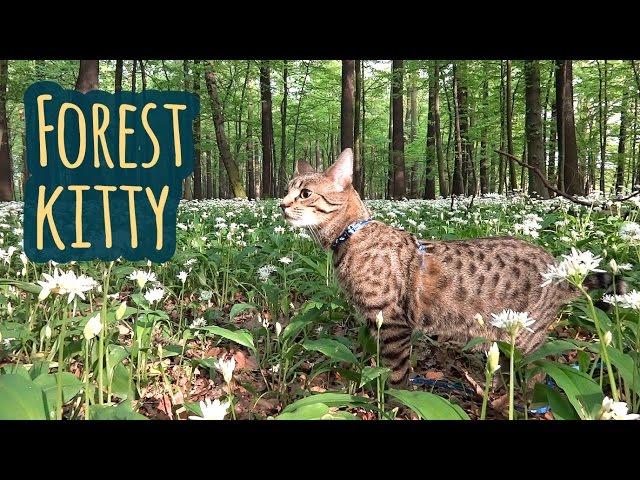 Forest kitty Jonasek
