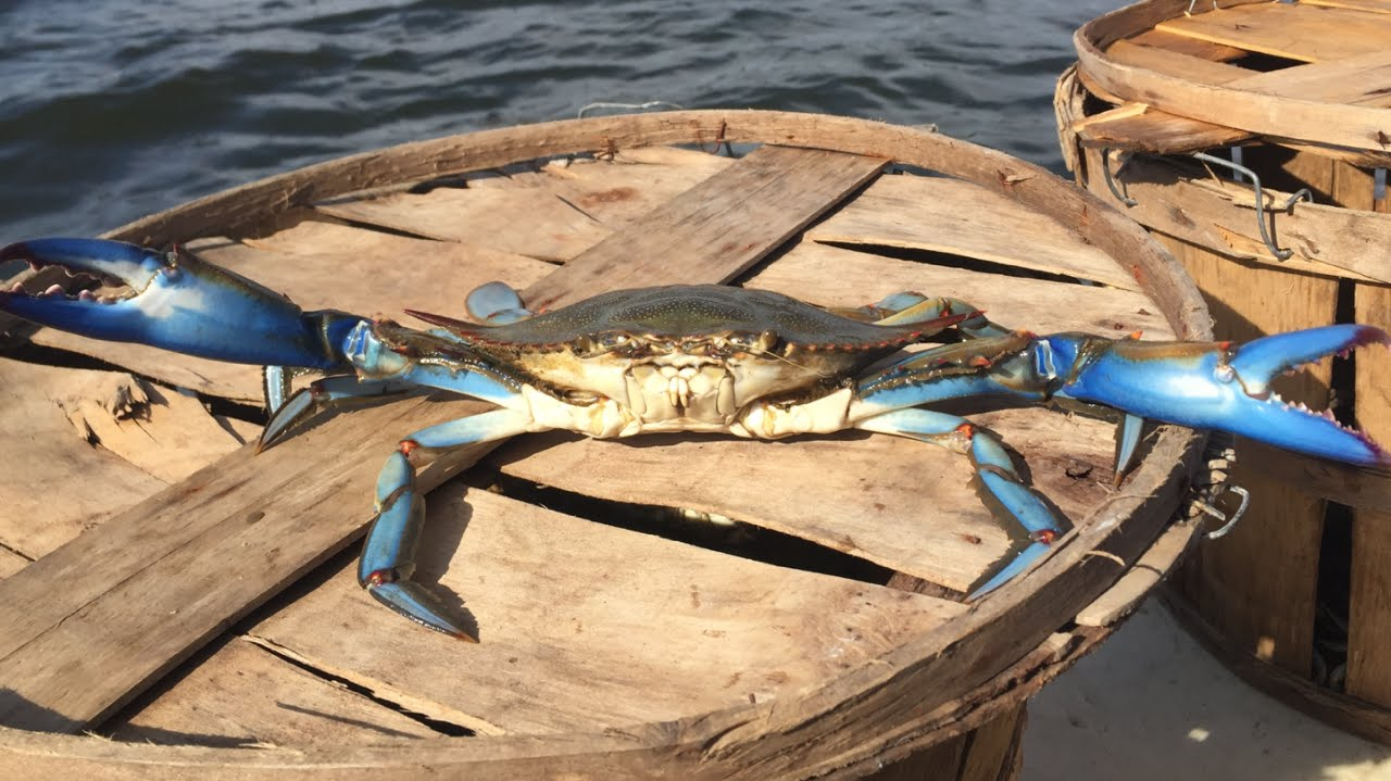 how to catch crabs with a crab line