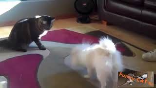Funny Cats vs Dogs First Meeting Compilation 2015