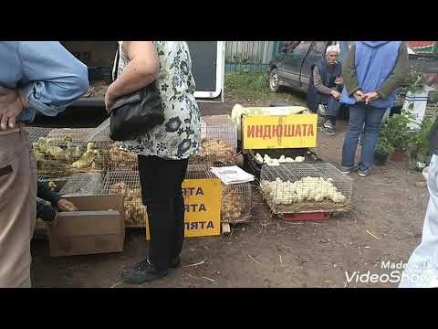 Птичий рынок в Малоярославце.