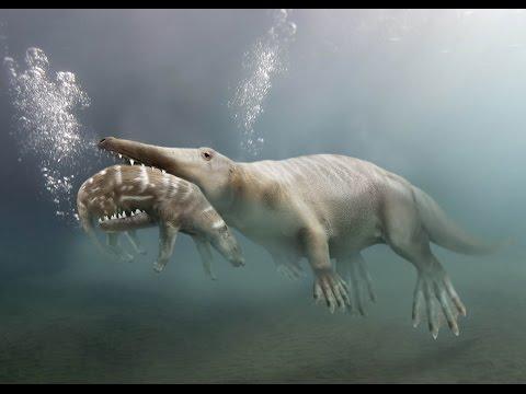 ambulocetus- -enciclopedia-sobre-dinosaurios