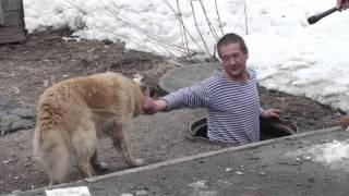 Бомжи в Новокузнецке построили собакам дом