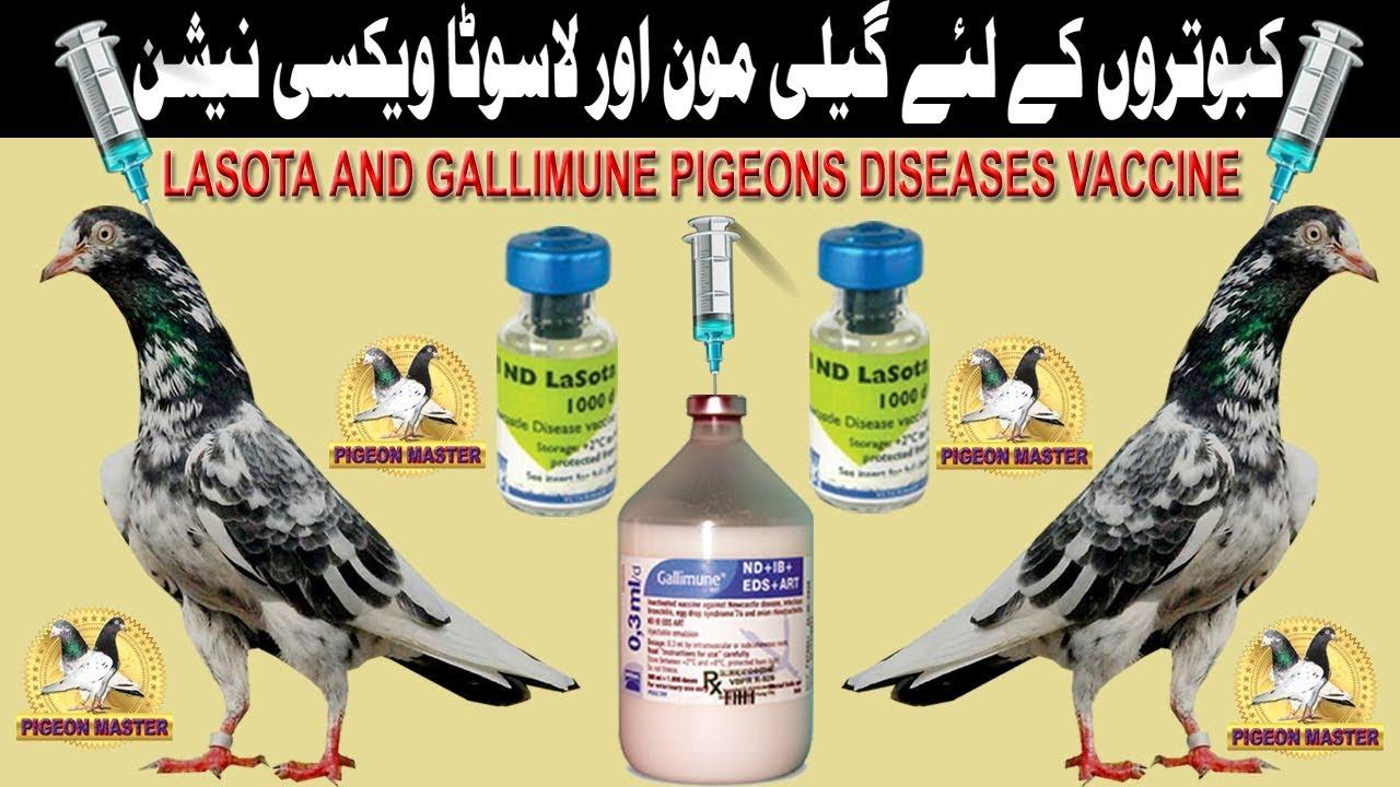 LASOTA AND GALLIMUNE PIGEONS DISEASES VACCINE
