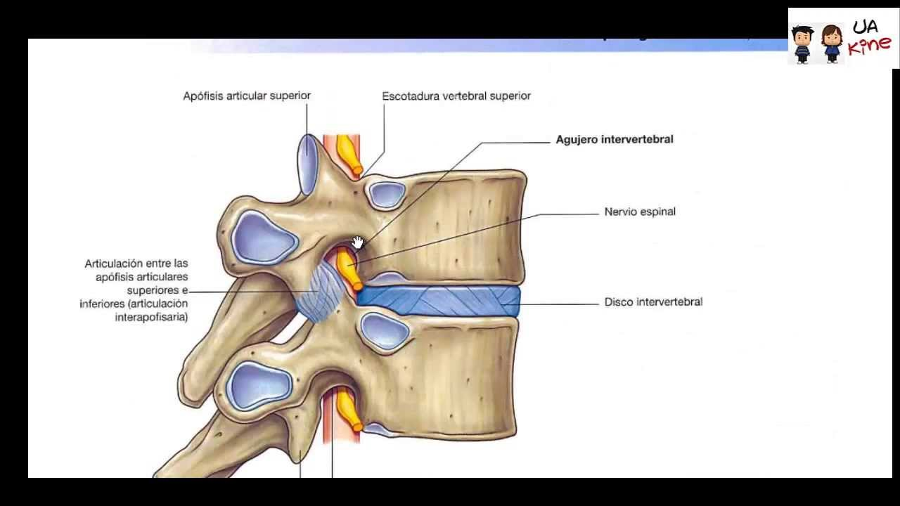 Anatomia - Puntos Claves Tronco Region Posterior - YouTube