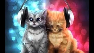 2 песни которые пели котята
