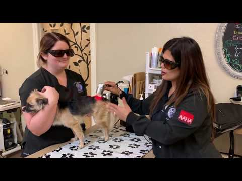 Cold Laser Treatment (Orchid Springs Animal Hospital)