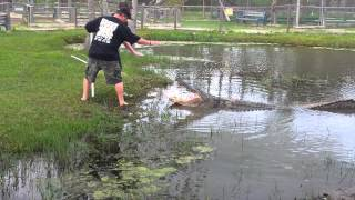 At a gator farm in Beaumont Texas