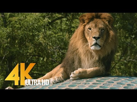 4K Wild Animals in Warwaw Zoo, Poland - Relax Video with Floating Music | Urban Life