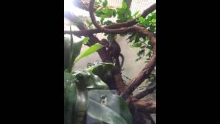 Woodley Park Zoo!  Wash.,D.C.  06/01/2013.  #Porno