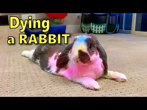 Dying Rabbit Fur Safely | How To Color Dye A Bunny