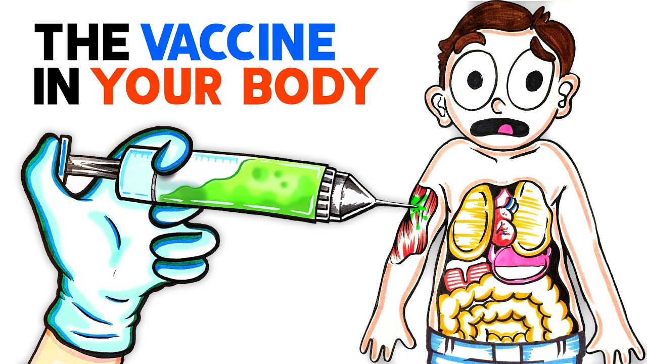 What The COVID Vaccine Does To Your Body - YouTube