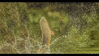 В дикие Сибирские болота за рыбой.