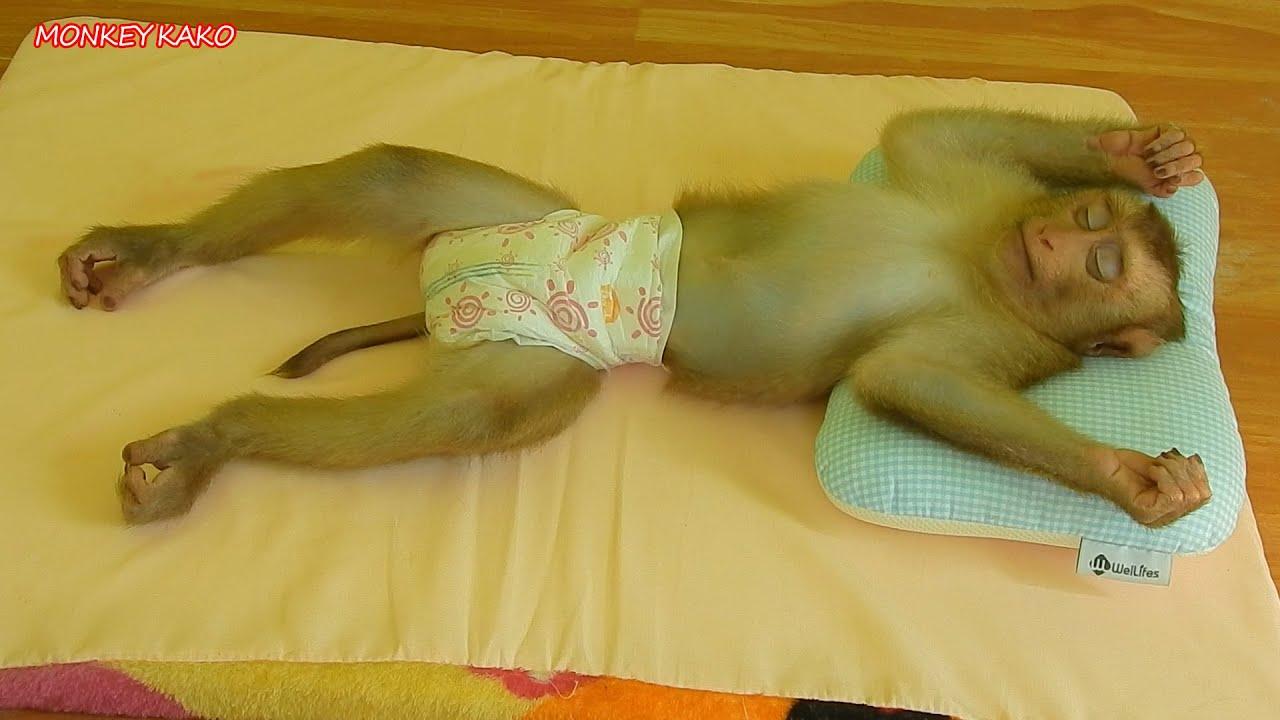 Amazing Monkey | Adorable Monkey Kako Lovely Sleeping In Sweet Dream | Funny Animals