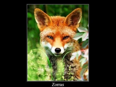 Zorras .com