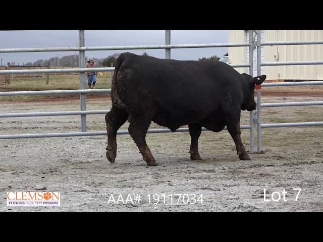 Clemson Extension Bull Test Lot 7