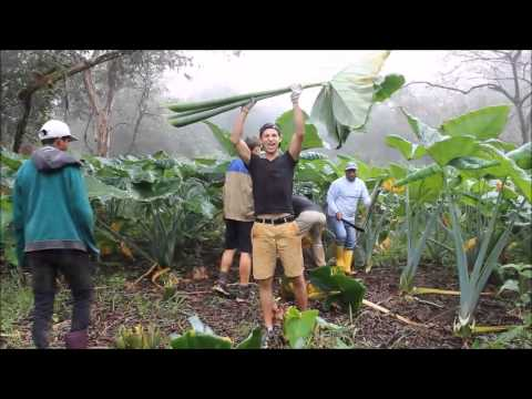 Conservation in the Galapagos Islands, Projects Abroad