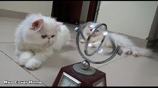 Funny Cat Play With Globes | Funny Cat Video 2016 | Meo Cover Home