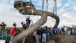 Farmer uncovers 11,000-year-old mammoth