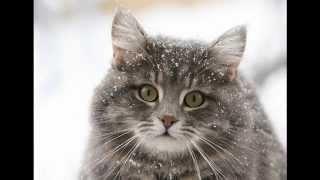 Акана влажный корм для кошек