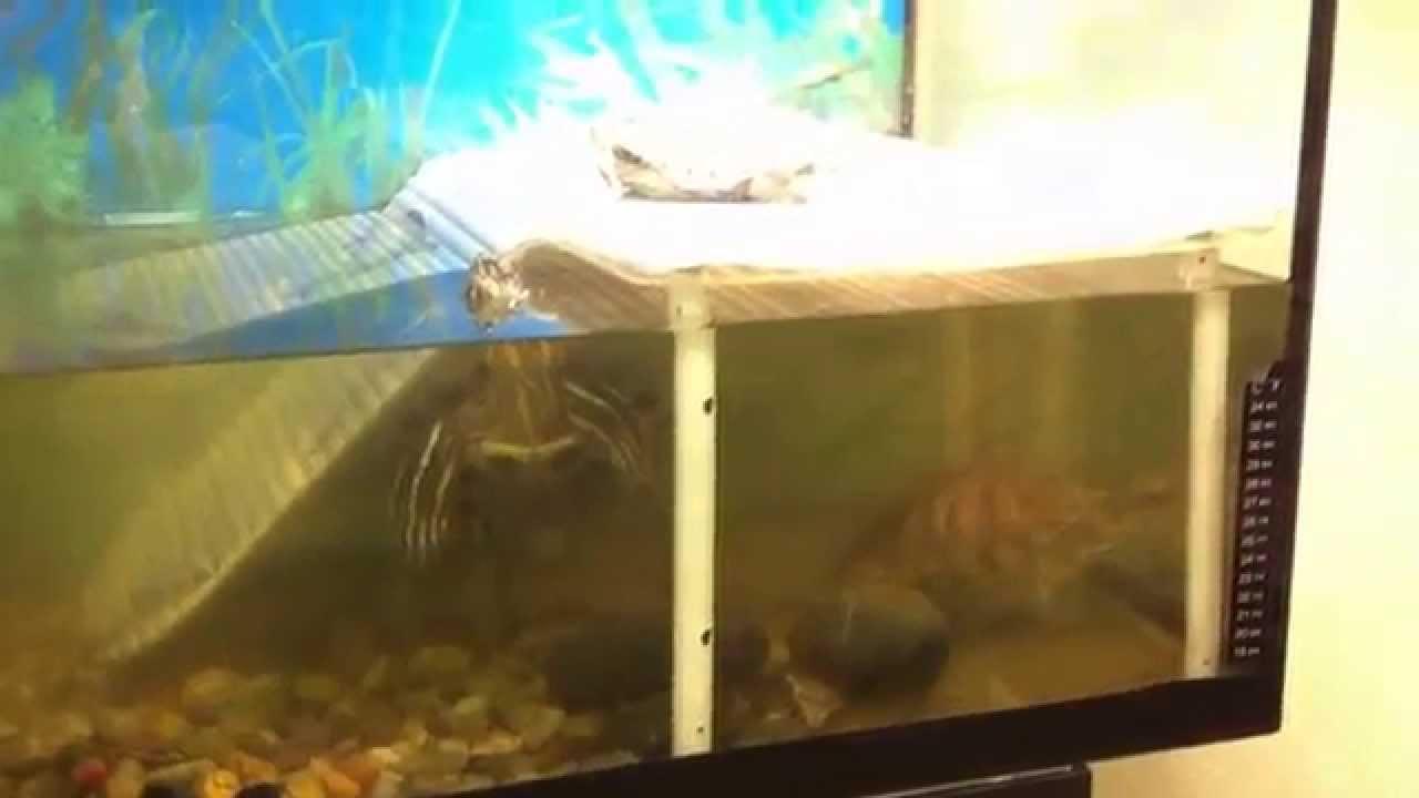 Если вы новичок и еще не определились, какой аквариум купить, обратите свое внимание на круглый аквариум или аквариум-бокал. Такие аквариумы подходят для небольших помещений, они удобно разместятся на вашем рабочем столе или книжной полке, занимая совсем немного пространства.