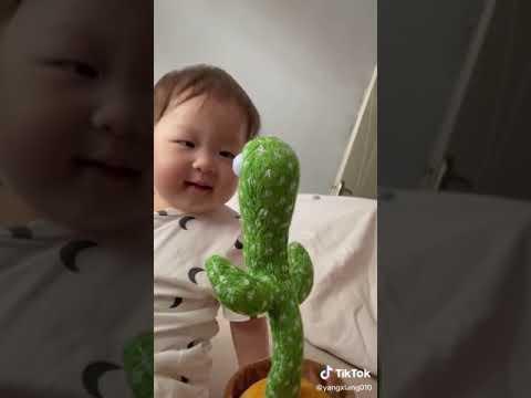Tanzender Kaktus macht Geräusche nach - TikTok