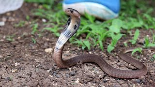 साप के बच्चे लेकिन कितने फुर्तीले देखिये यह पूरा वीडियो | Baby snake rescue from Ahmednagar