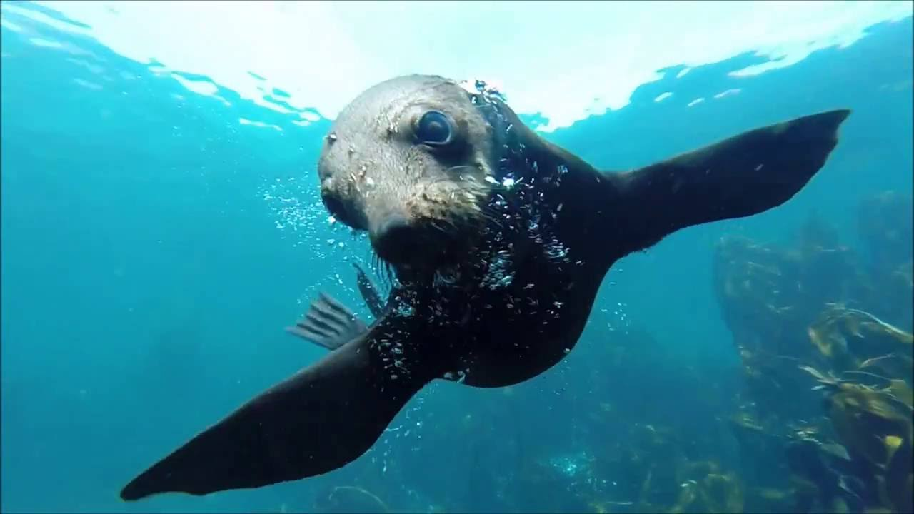 Seal Diving Trip With Adrenalised Diving Cape Town