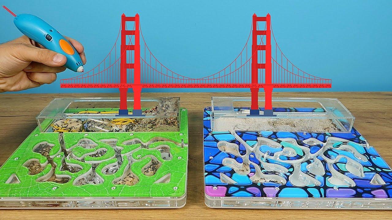 Соединил 3Д мостом два формикария, но муравьи не обрадовались!
