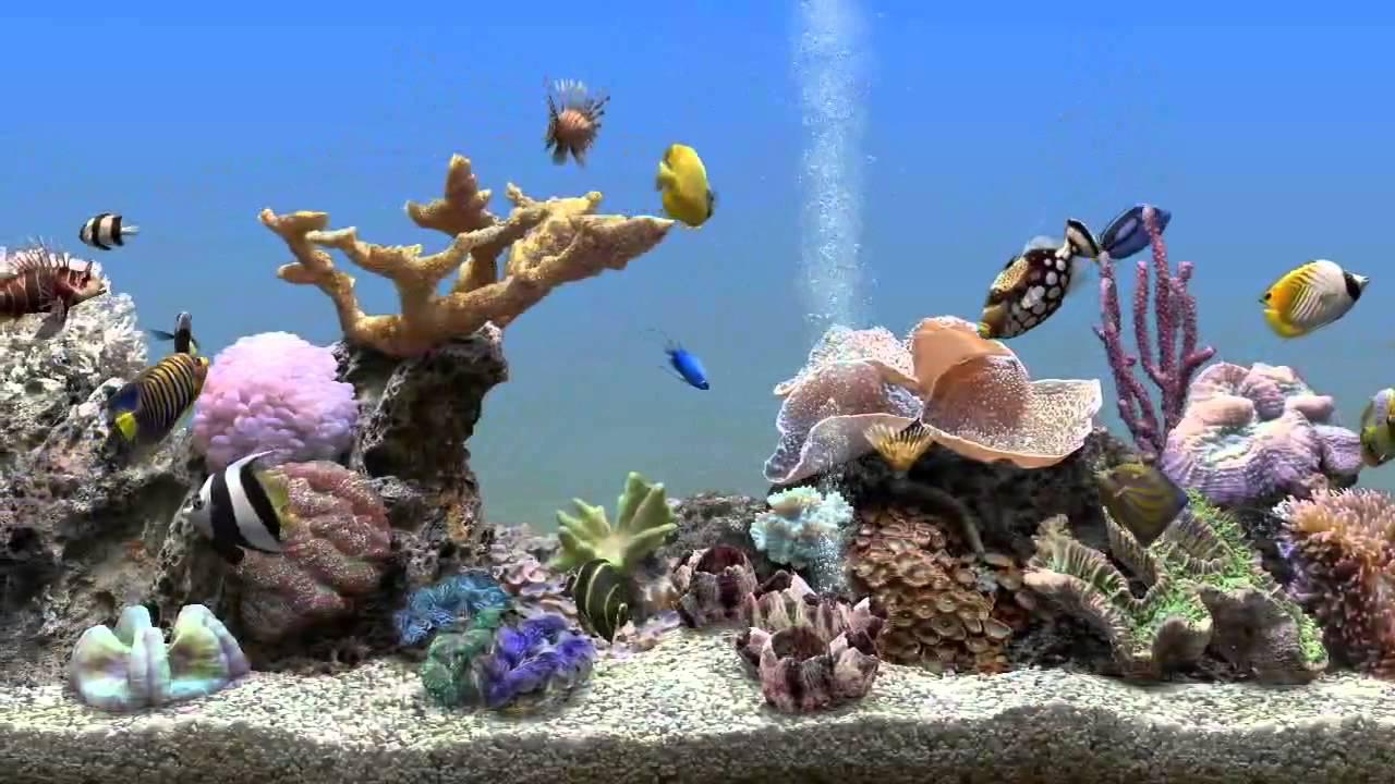 аквариум заставка - YouTube