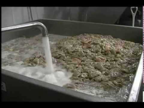 FPEC Corp. Vacuum Feed Hopper