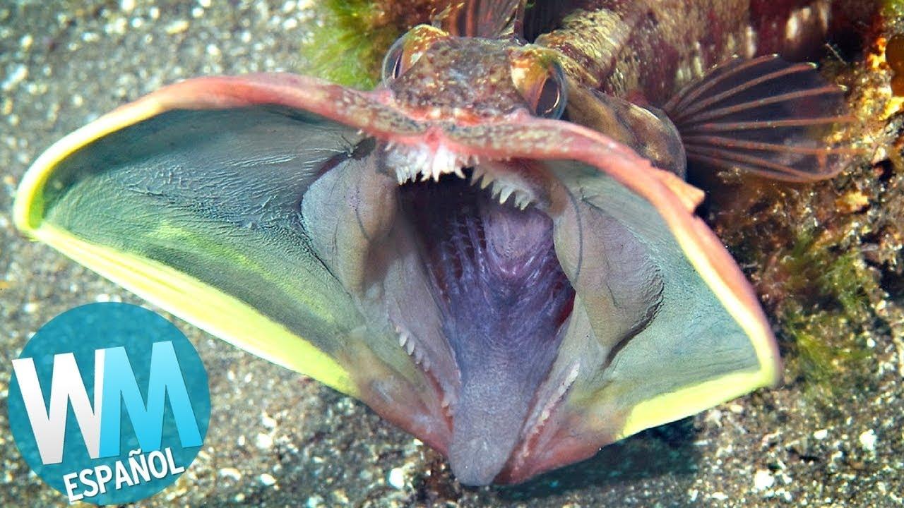 Top 10 peces m s espeluznantes youtube for Productos para estanques de peces