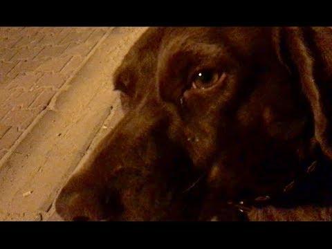 Bir sokak köpeğinin tertemiz ve karşılıksız sevgisi