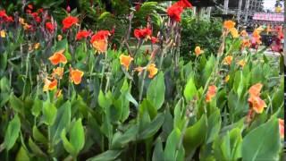 Jardin de Valombreuse , Guadeloupe 1
