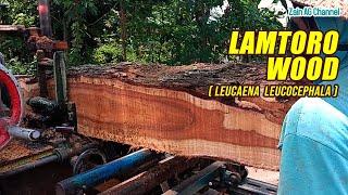 Sawmills, Lamtoro Wood
