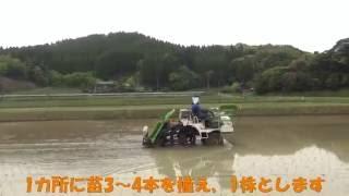 JA長生 もっと安心米 生産グループのお米 田植え風景