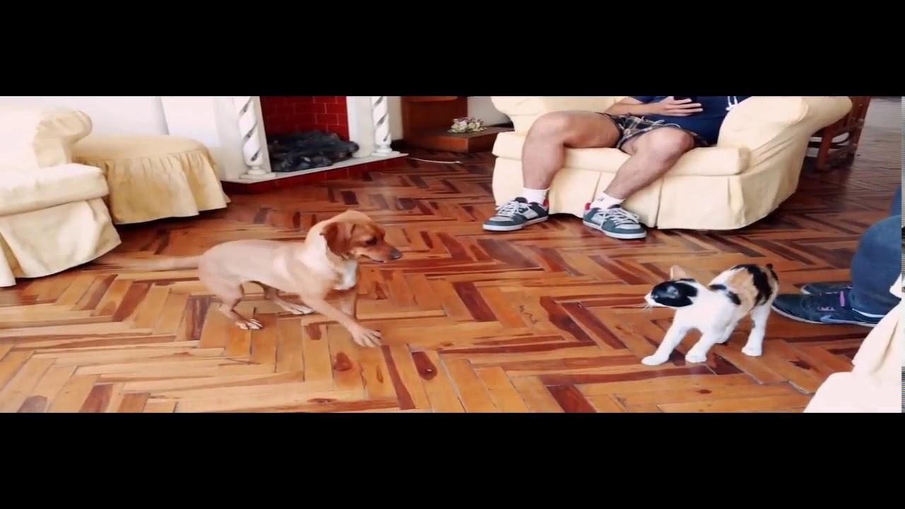 Собака и кошка встречаются впервые - YouTube