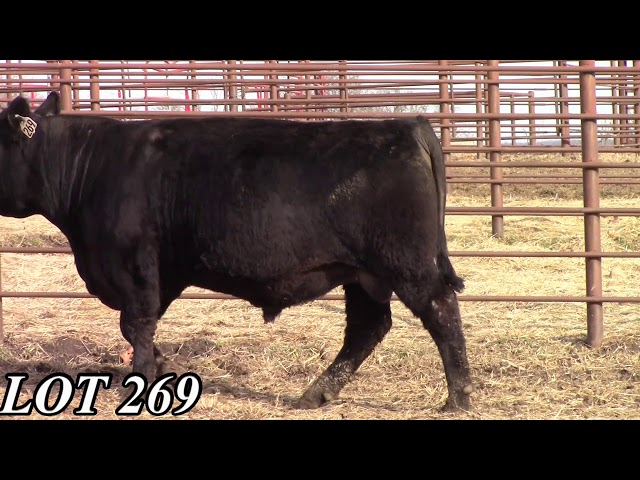 Mead Angus Farms Lot 269