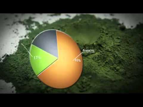 DLA SPIRULINA  AMAZING ALGAE NASA wmv   YouTube