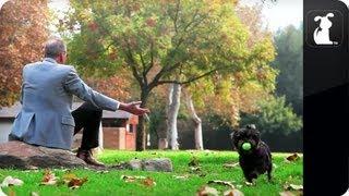 Walken Dogs / Christopher Walken Parody -- Episode 6
