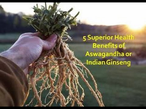 Aswagandha or Indian Ginseng, The Ayurvedic Herb with 5 Supe