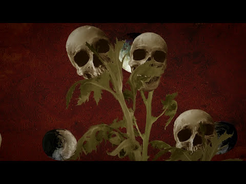 The Wilde Flowers (LYRIC VIDEO)