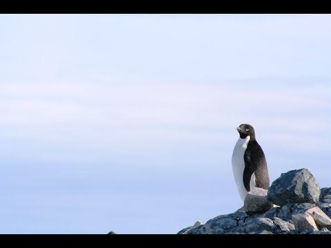 12 Antarctica