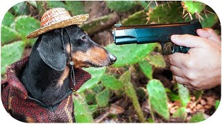 Once Upon A Time in... Mexico! Cute & funny dachshund dog video!