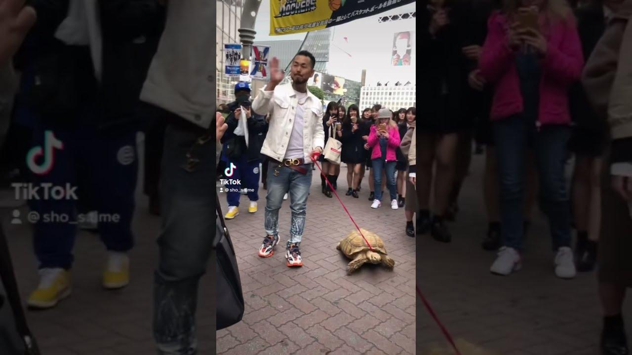 亀と渋谷でデートする男🐢 #Shorts