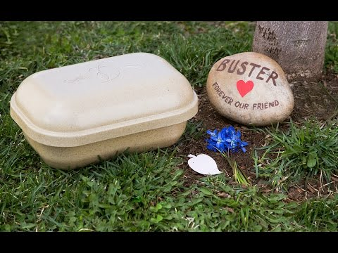 Paw Pods   Biodegradable Pet Burial Pods