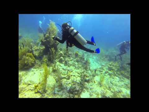 Sharkdive Nassau 24-04-2013